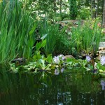 backyard-pond-h-800x532