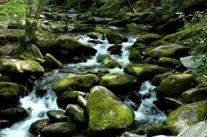 Drive along Roaring Fork Motor Nature Trail in the Great Smoky Mountain National Park, near Gatlinburg, Tennessee