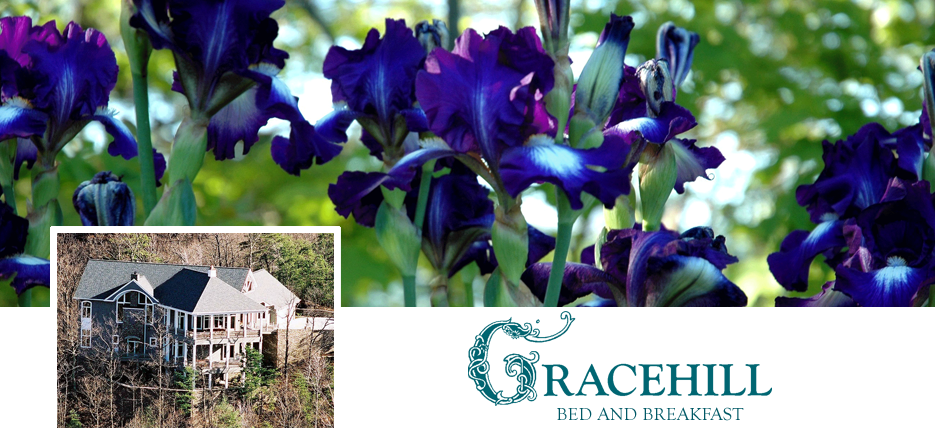 Spring Gardens- Iris