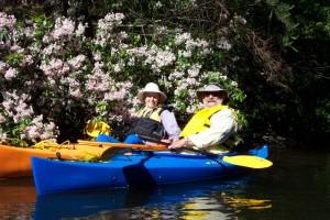Mountain Laurel Blooming while Kayaking on Abrams Creek