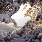 snow-postcard-800x570