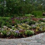 backyard-pansies-1600x1057