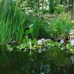 backyard-pond-h-800x532
