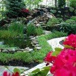 backyard-rhodos-and-zinnas-4-800x532