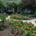 backyard-zinnias-1600x1064