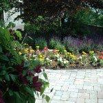 may-gardens-clemitis