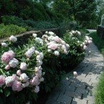may-gardens-peonys-and-her
