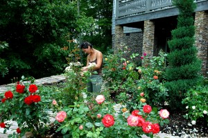 Brandy and the Gracehill Rose Garden